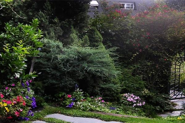 entrada tomillo arco plantas flores rosales rosas
