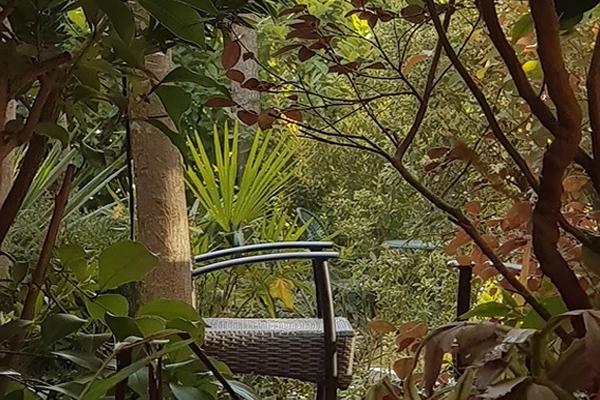 Atrio vegetacion con vistas