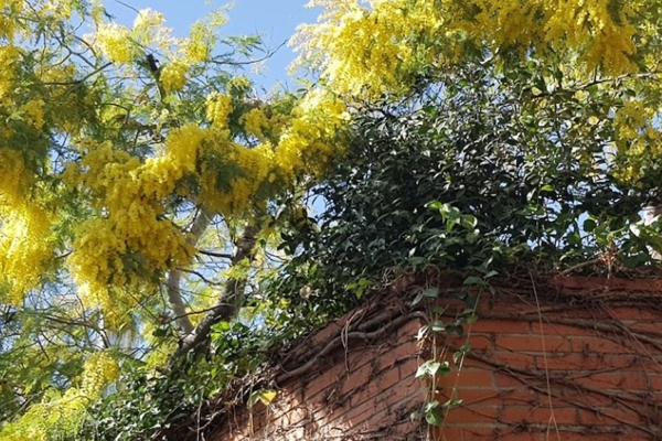 Terraza jardin colgante